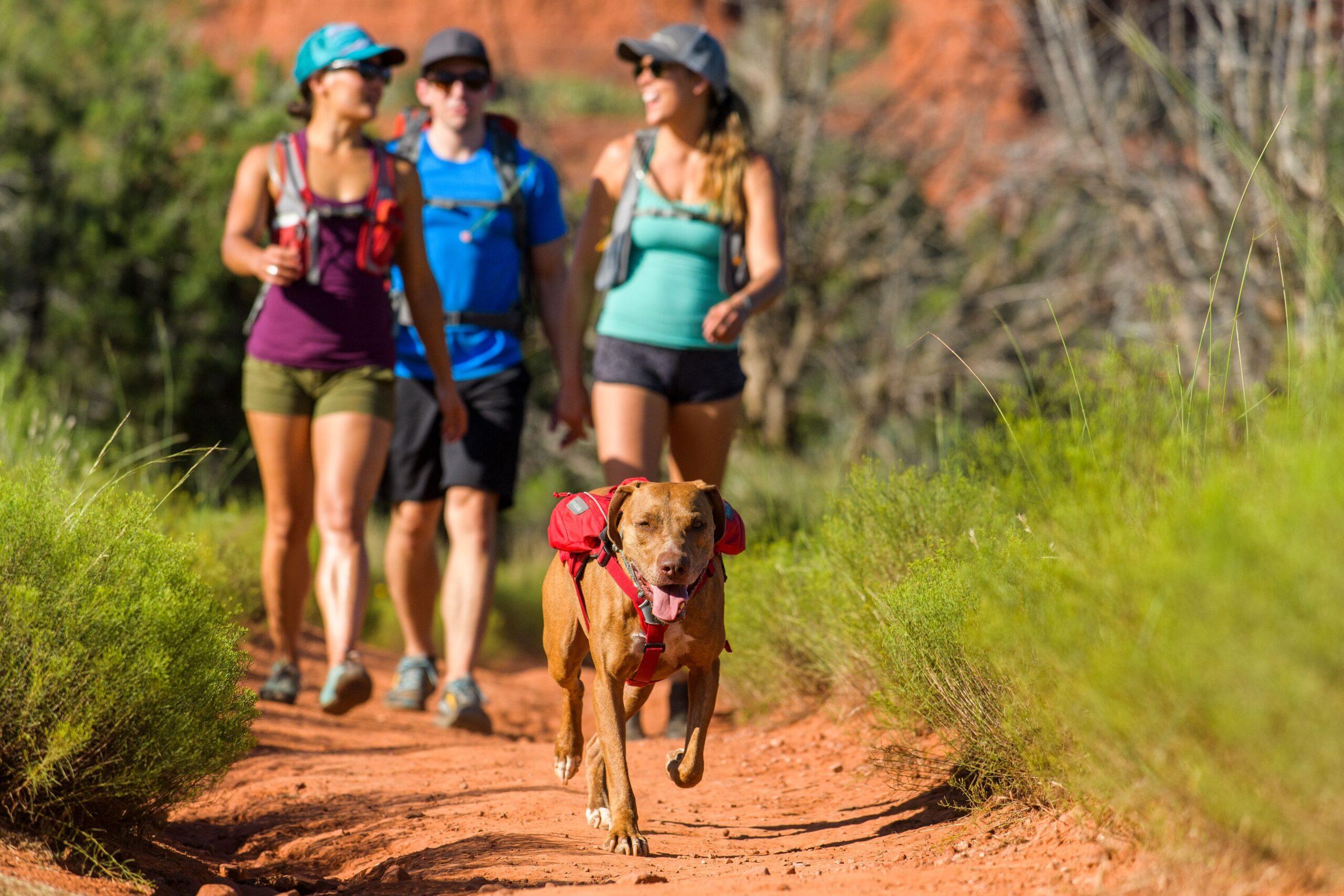 Ruffwear Singletrak Dog Hydration Pack